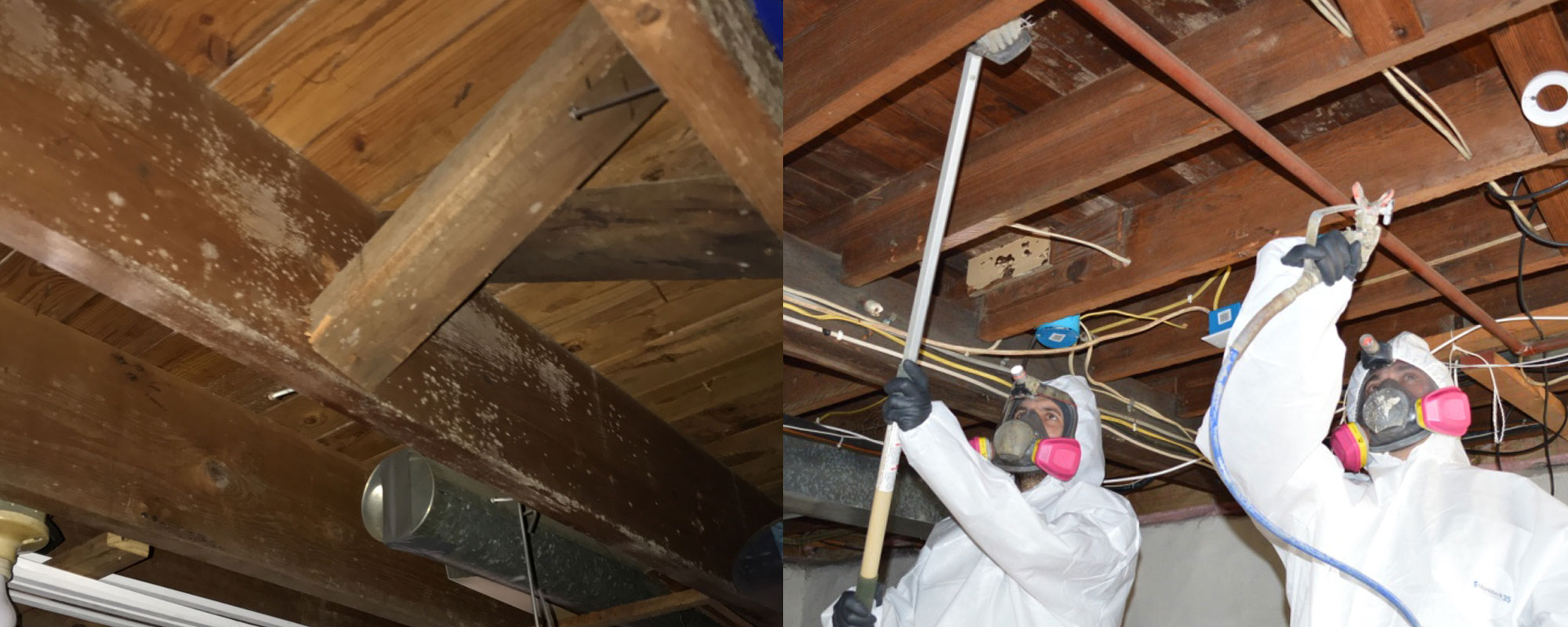 Basement Mold Removal Eastern Pa